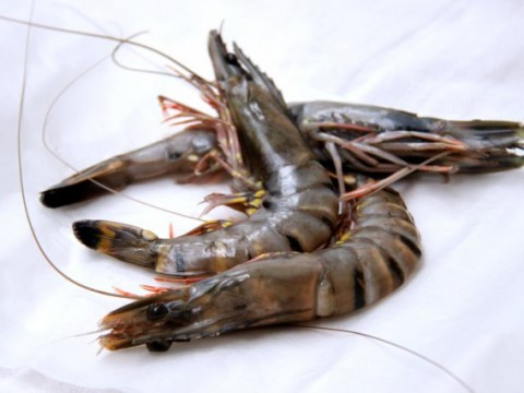 Raw Head on Black Tiger Prawns